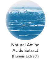 Natural Amino Acids Extract (Humus Extract)
